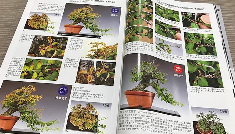 盆栽世界 2018 2月号 梅盆栽