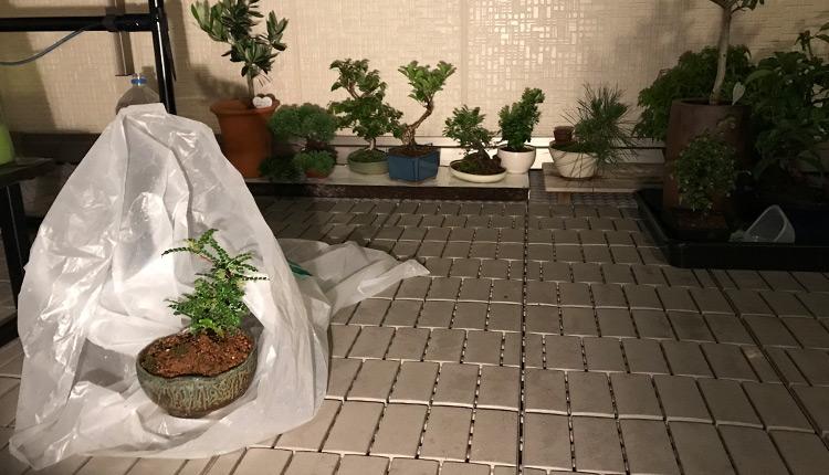 ビニール袋をかぶせて農薬散布