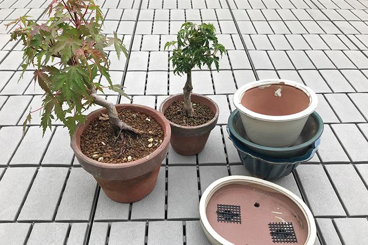 上野グリーンクラブ 2018サマーセール 購入商品