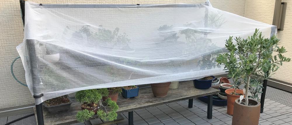 夏場の盆栽棚 寒冷紗